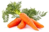 Fresh grown carrots are nice to chew in-between meals.
